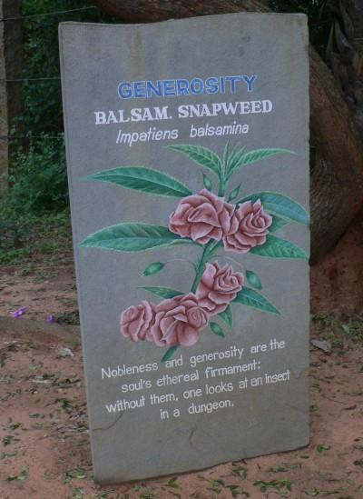 Auroville balsam (2)