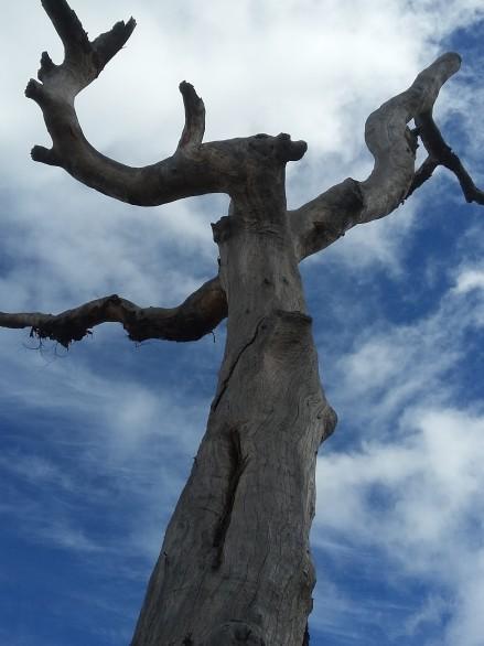 Ellery park tree