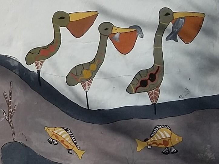 Pelicans Walgett